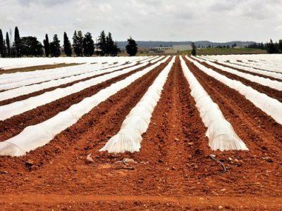 industria-agro-alimentaria